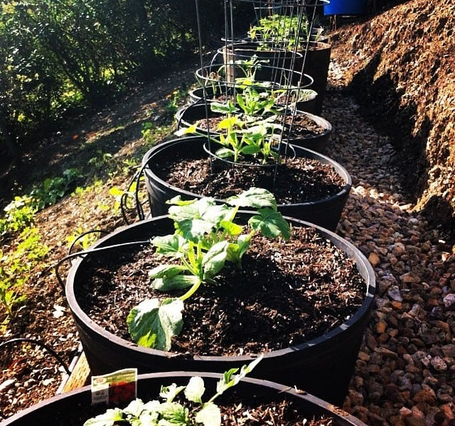 Tomatoes, peppers, onions, squash.