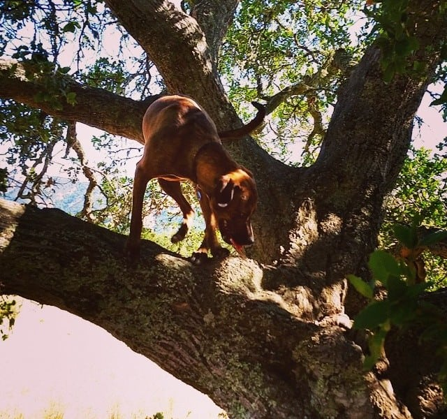 Dog in a tree.