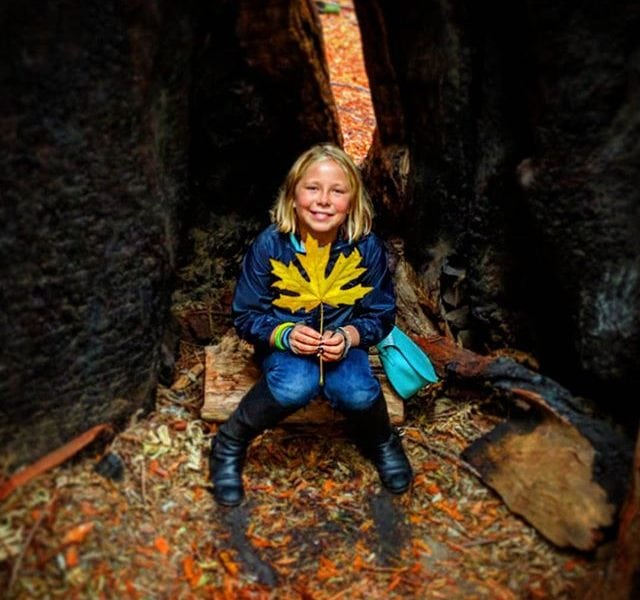 Bella with leaf; she's sitting inside a redwood tree, prolly more than 2,000 years old, prolly more than 20,000 tons above her calmly seated happy place.